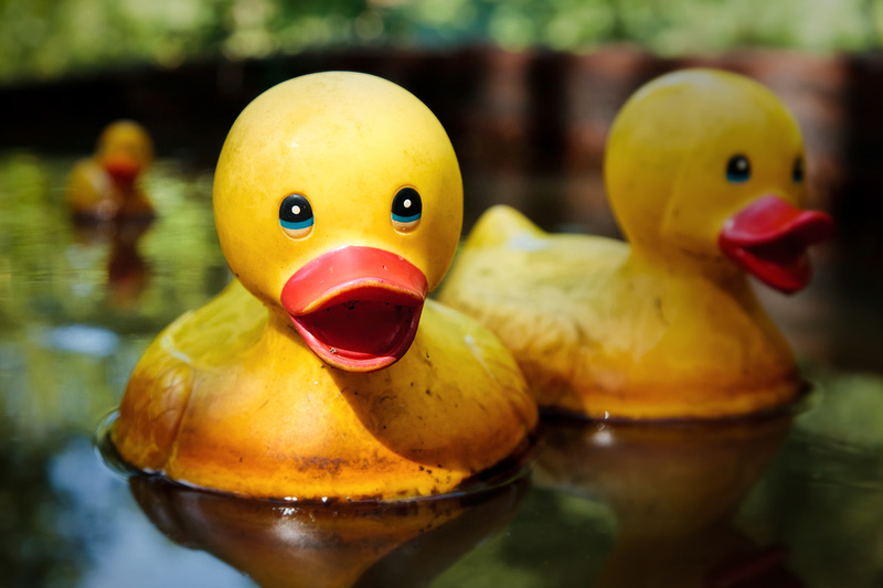 Toy Ducks in Pond by bokeh photographic (Alistair Grant) Photographer Cambridge.