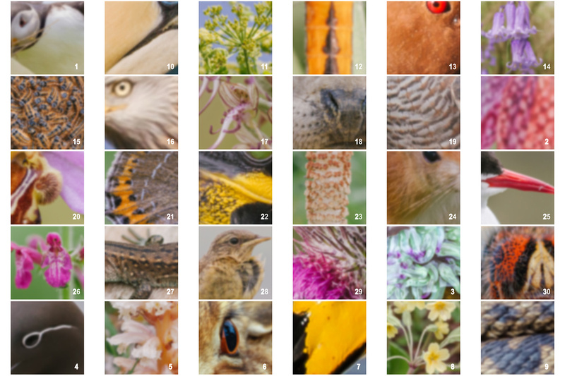 Christmas 2018 Wildlife Quiz Contact Sheet. © bokeh photographic (Alistair Grant): Freelance Photographer, St Ives, Cambridge and across the UK.
