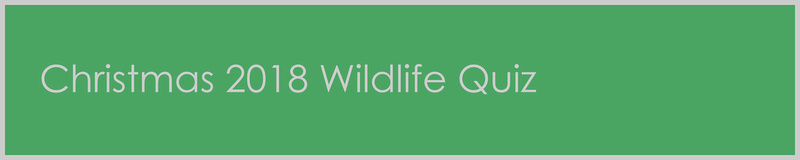 Page Title Artwork – Christmas 2018 Wildlife Quiz. © bokeh photographic (Alistair Grant): Freelance Photographer in Cambridge, Huntingdon, Peterborough, Bedford, Ely, St Neots, St Ives and London.