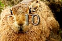 bokeh photographic (Alistair Grant) - Freelance Photographer Cambridge Blog 10 - Hare Raising