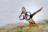 bokeh photographic (Alistair Grant) - Freelance Photographer Cambridge Blog 60 - Rewilding