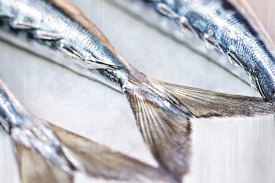 Food Photography Portfolio - Close-up detail of tails of three fresh fish on a silver background. © bokeh photographic (Alistair Grant): Food Photographer, St Ives, Cambridge.