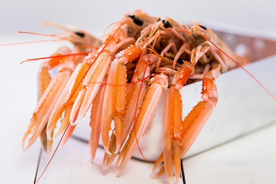 Food Photography Portfolio – Langoustine in Silver Catering Tin. © bokeh photographic (Alistair Grant): Food Photographer, St Ives, Cambridge.