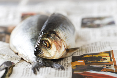 Food Photography Portfolio – Fresh Herring on Newspaper. © bokeh photographic (Alistair Grant): Food Photographer, St Ives, Cambridge.