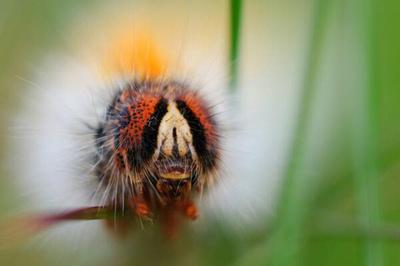 Caterpillar Macro. © bokeh photographic (Alistair Grant): Professional Photographer: Cambridgeshire, Bedfordshire, Northamptonshire, Norfolk, Suffolk, Essex & Hertfordshire.